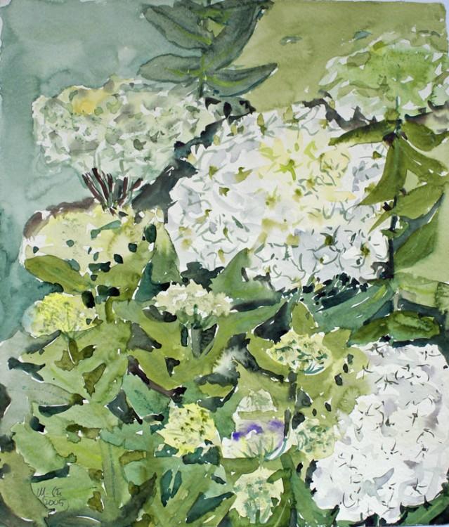 (Weiße) Hortensien